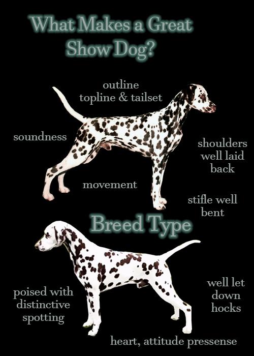 BreedTypeShowDog